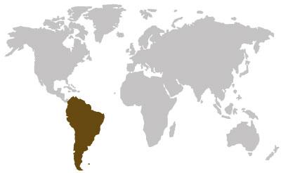 suedamerikanische-holzarten