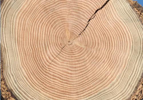 Holz Struktur holzstruktur holzlexikon glossar holz kahrs