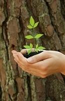 NachhaltigkeitSEhSgBCVP3QmY