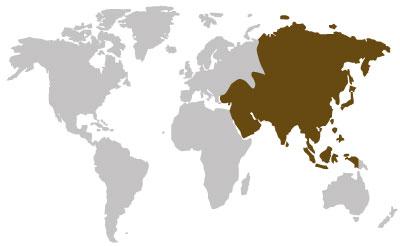 asiatische-holzarten
