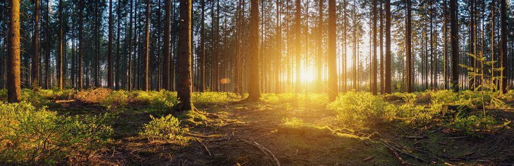 FSC und Nachhaltigkeit